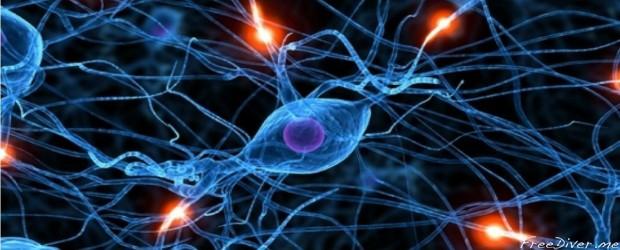 Нейроны человеческого мозга