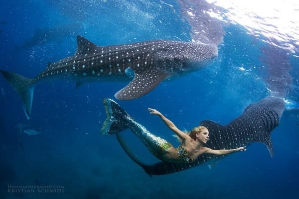 Русалка с китовыми акулами