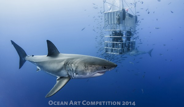"Davide Lopresti ""Animal in Cage"" Shot at Isla Guadalupe, Mexico"