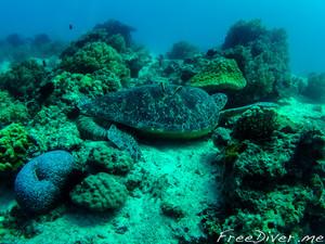 Большая черепаха вблизи о. Баликасаг
